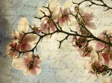 Poesia – SPECCHIO di Teresa Levantini