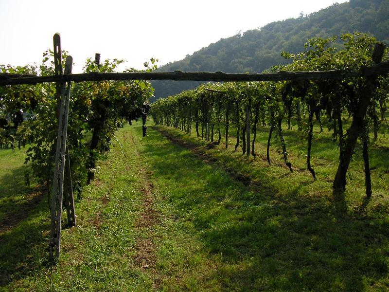 Niente Bordeaux, siamo inglesi:sale l'appeal dei vini italiani