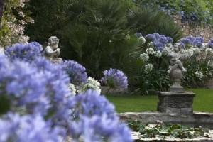 agapanti - giardini Alassio