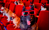 Anche Fido in fila al botteghino del cinema